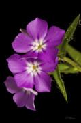 Christopher Holmes - Trio In Purple