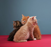 Embracing Posters - Trio Of Kittens Poster by Martin Poole
