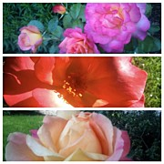 Floral Art - Trio Of Roses #flowers #roses #rose by Anna Porter