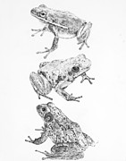 Trio Drawings Prints - Trio Print by Sarah Zilbershteyn