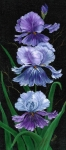 Flowers ..tags: Flowers Paintings - Triple Iris by Marveta Foutch