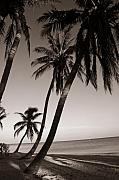 On The Beach Metal Prints - Triple Palms Metal Print by Susanne Van Hulst