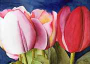 Watercolour Paintings - Triple Tulips by Ken Powers