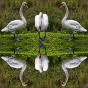 Chris Lord - Triplets In Reflection
