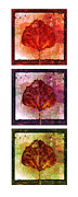 Leaf Collage Framed Prints - Triptych Leaves II Framed Print by Ann Powell