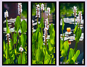 Three Rivers Digital Art - Triptych of Water Hyacinth by Kathy Clark