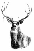 Rack Drawings - Trophy Deer by Meridith Johnson