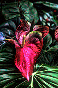 Flower Photographers Art - Tropic Flower by Tom Prendergast