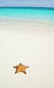 Bahamas Posters - Tropical Beach And Starfish Poster by Mehmed Zelkovic