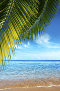 Frond Posters - Tropical Beach Poster by Carlos Caetano