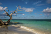 Tropical Photographs Photo Originals - Tropical Beach by Diego Pagani