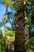 Tropical Trees Posters - Tropical Beauty Poster by Mike Reid