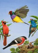 Bright Feathers Posters - Tropical Birds Poster by RB Davis