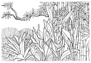 Bamboo Drawings Posters - Tropical Blend Poster by David Burkart