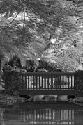 On-the-look-out Acrylic Prints - Tropical Bridge in BW by Darcy Michaelchuk