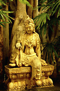 Buddhist Art - Tropical Buddha by Cheryl Young