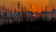 Sea Oats Digital Art Prints - Tropical evening Print by David Lee Thompson