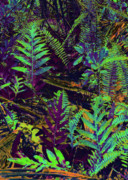Kerri Ligatich Digital Art - Tropical Ferns by Kerri Ligatich