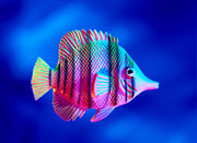 Tropical Fish Close-up Print by Lawrence Lawry