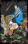 Surrealism Art Work - Tropical Fish by Miss Dawn