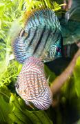 Aquariums Photos - Tropical Fish by Steve Nagy