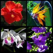 Multiples Photos - Tropical Flowers Multiples by Susanne Van Hulst