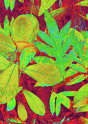 Tropical Foliage Posters - Tropical Foliage 1 Poster by Kerri Ligatich