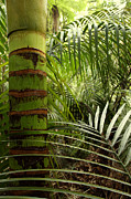 Bush Photos - Tropical forest jungle by Les Cunliffe