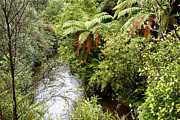 Creek Art - Tropical forest by Les Cunliffe