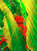 Leaf Collage Framed Prints - Tropical Fusion Framed Print by Stephen Anderson