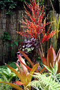 Bamboo Fence Prints - Tropical Garden Print by Karon Melillo DeVega