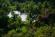 Roger Mullenhour - Tropical Hideaway