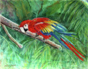 Parrot Metal Prints - Tropical Home Metal Print by Arline Wagner