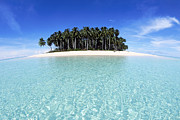 Coconut Palm Tree Prints - Tropical Island With Coconut Palms, Mentawai Group Print by John Seaton Callahan