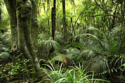 Forest Photographs Prints - Tropical jungle Print by Les Cunliffe