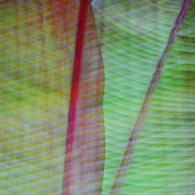 Image Overlay Posters - Tropical Leaves No 11  2009 Poster by Joseph Duba