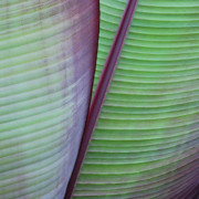 Joseph Duba Metal Prints - Tropical Leaves No 7  2009 Metal Print by Joseph Duba