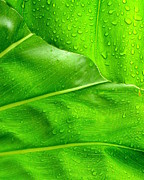 Ranjini Kandasamy Art - Tropical Leaves by Ranjini Kandasamy