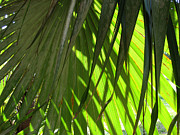 Fronds Paintings - Tropical Light by Rosie Brown