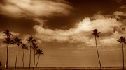North Shore Posters - Tropical Mood Sepia Poster by Cheryl Young