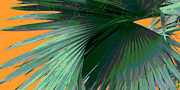 Palmetto Photos - Tropical Palm Grand Cayman by Ann Powell