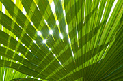 Exotic Leaves Posters - Tropical Palm Leaf Poster by Christopher and Amanda Elwell
