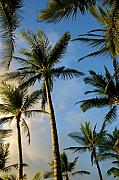Tropical Sunset Prints - Tropical Palm Trees of Maui Hawaii Print by Pierre Leclerc