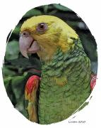 Parrot Metal Prints - Tropical Parrot 2 Metal Print by Larry Linton