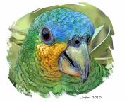 Parrot Metal Prints - Tropical Parrot Metal Print by Larry Linton
