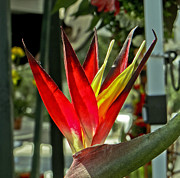 Tropical Photographs Originals - Tropical Plant by Dennis Dugan