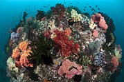 Whips Prints - Tropical Reef, Indonesia Print by Matthew Oldfield