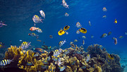 Underwater Photos - Tropical Reef by Rico Besserdich