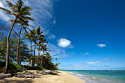Oahu Photos - Tropical Respite by Mike Reid