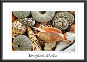 Round Shell Photo Prints - Tropical Shells... Greeting Card Print by Kaye Menner